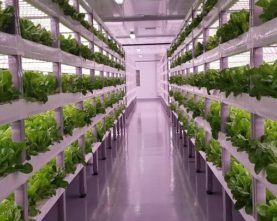Indoor-Farming-Technologies-Market-768x405-1-277x221 AB Innovation Consulting - Your Legal-Tech Partner