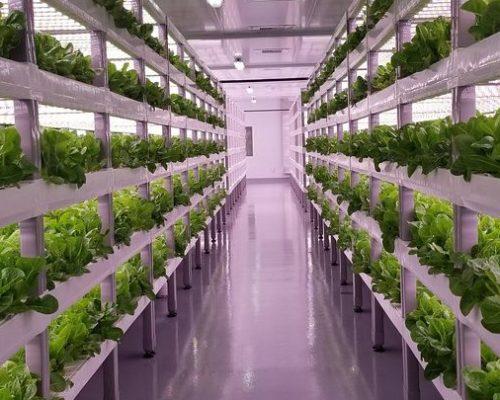 Indoor-Farming-Technologies-Market-768x405-1-500x400 Agritech