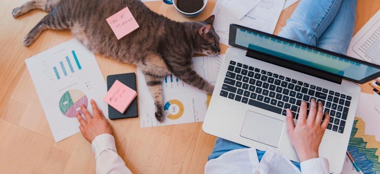Persona in smart working con un portatile, circondata da vari fogli, un gatto e post-it